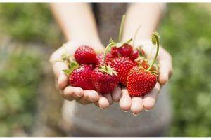 Des pesticides interdits et des perturbateurs endocriniens dans nos barquettes de fraises