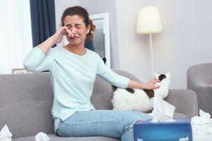 Allergie aux poils de chat : un vaccin pour y mettre fin bientôt disponible
