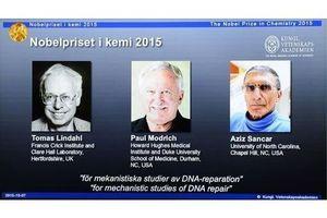 Le Nobel de chimie récompense des travaux sur les systèmes de réparation de l'ADN