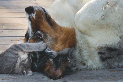 «Compagnons», l'exposition qui célèbre les chiens héros