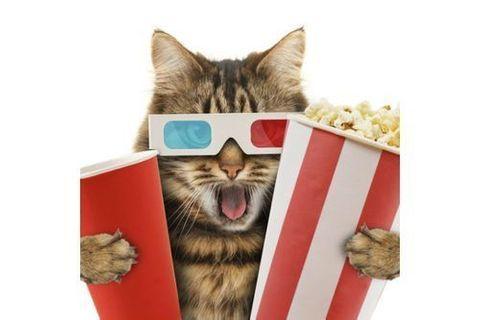 20 films avec des animaux à regarder en famille !
