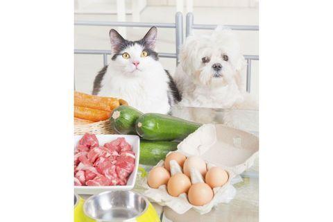 10 recettes maison pour mon chien et mon chat