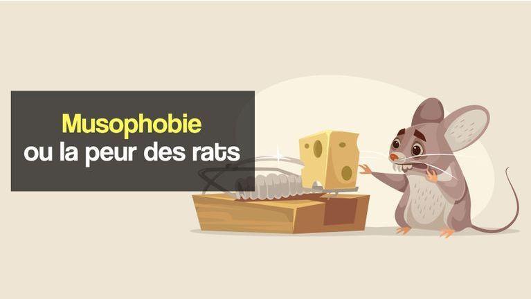 musophobie ou peur des rats