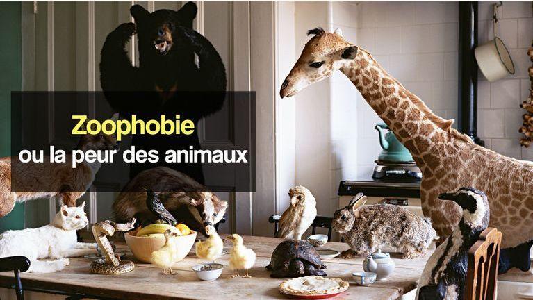 zoophobie peur des animaux
