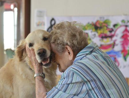 """Zoothérapie : faire de l'animal une source de """"mieux vivre"""""""
