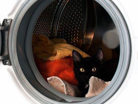Les dangers de la maison pour son chat