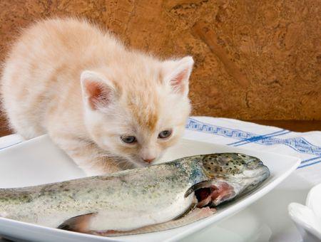 Quel poisson donner à mon chat?