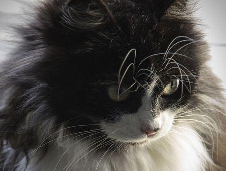 Comment nourrir son chat pour embellir son poil ?