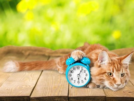 Quand mon chat doit-il manger? Et combien?