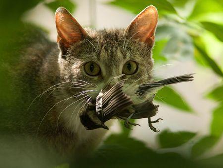 Mon chat rapporte ses proies, comment réagir ?