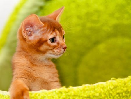 Petit chaton deviendra grand