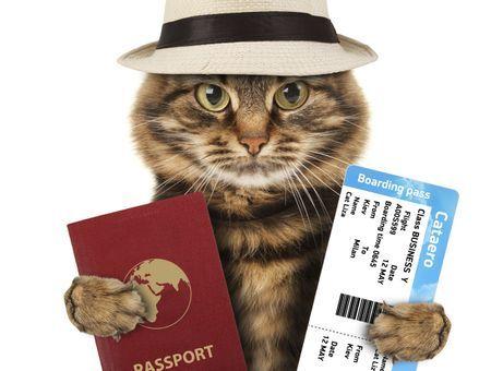 Les papiers du chat : quels documents sont indispensables ou recommandés lors d'une vente ou d'un don ?