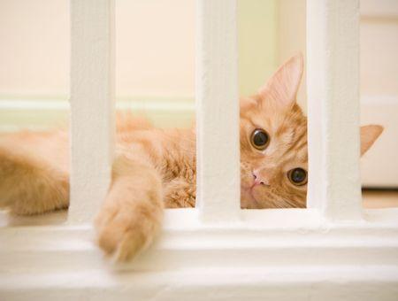 À un chat aussi, on peut apprendre les bonnes manières !