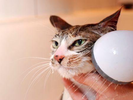 Comment toiletter son chat ?