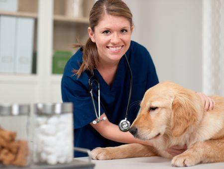 Les aliments pour chiens prescrits par le vétérinaire