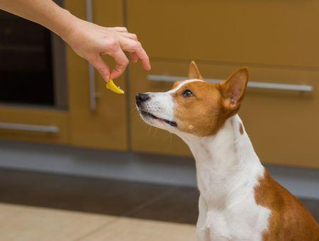 Comment apprendre à son chien à saisir doucement la nourriture ?