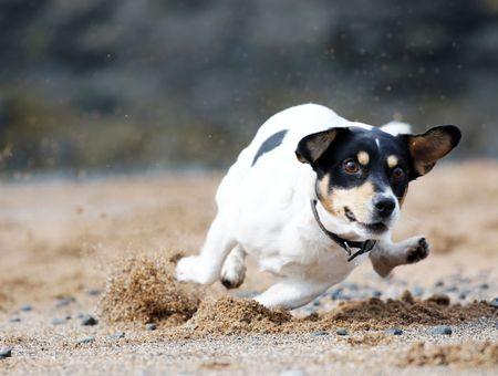 Mon chien est hyperactif : comment réagir ?