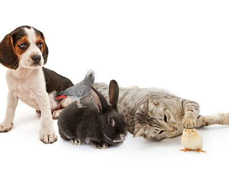 Cohabitation d'un chien avec d'autres animaux