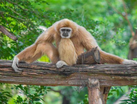 Covid-19 : le virus pourrait infecter de nombreux animaux