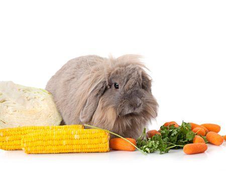 L'équilibre alimentaire du lapin