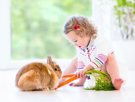 Mon lapin a du mal à manger