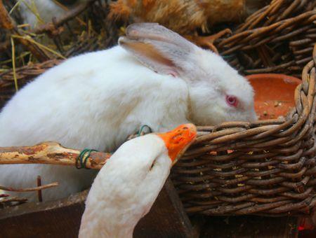 Nourrir son lapin et assurer l'usure des dents