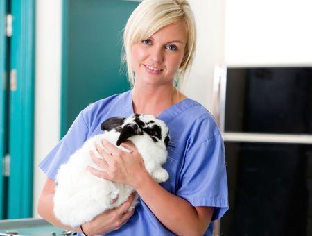 Les parasitoses digestives du lapin: symptômes et traitements