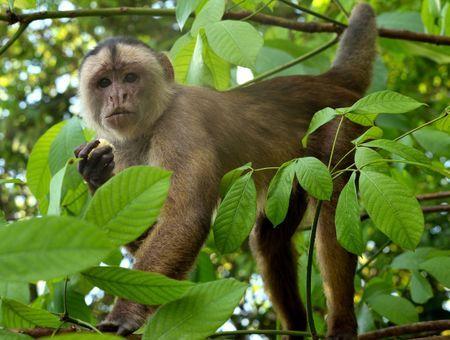 Réchauffement climatique : les espèces animales pourraient voir la part de leur habitat naturel réduite de 23% d'ici 80 ans