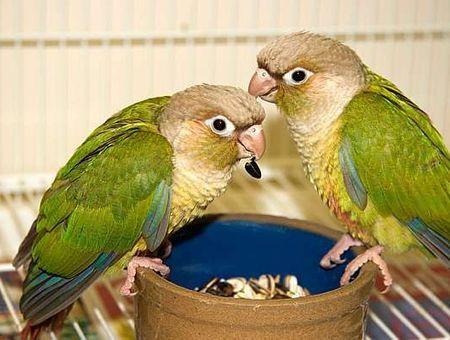 Bien nourrir son oiseau : c'est essentiel !