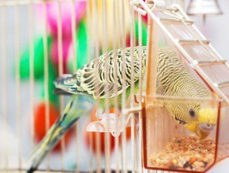 Perchoir et mangeoire pour oiseaux : lesquels choisir ? Comment les installer ?