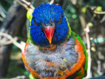 Picage chronique : pourquoi mon oiseau s'arrache les plumes ?