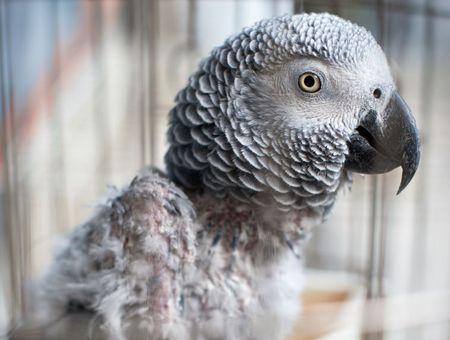 Parasites : comment protéger son oiseau ?