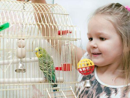 Bien choisir l'emplacement de la cage ou de la volière de votre oiseau