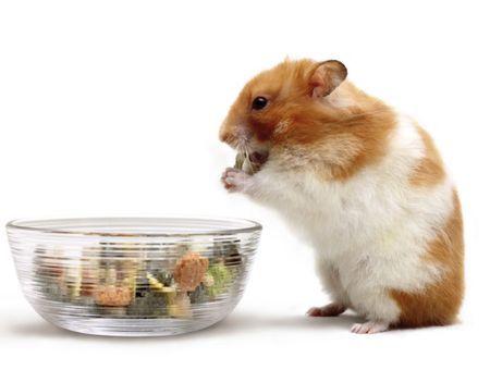Bien nourrir mon hamster