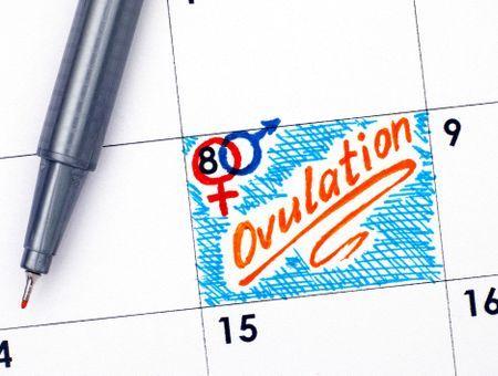 Calcul de la date d'ovulation