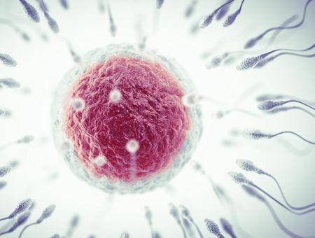Le don de sperme