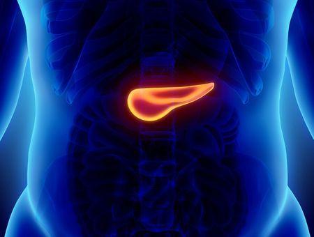 Pancréas : rôle, symptômes, cancer