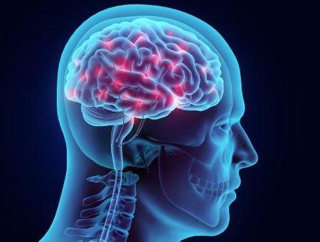 Le cerveau, le plus mystérieux de nos organes