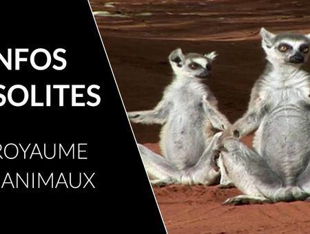 5 infos insolites sur les animaux