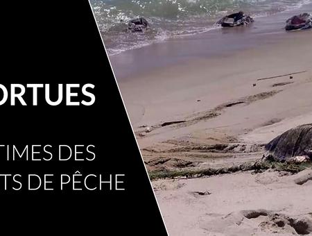 300 tortues retrouvées mortes dans les eaux mexicaines du Pacifique