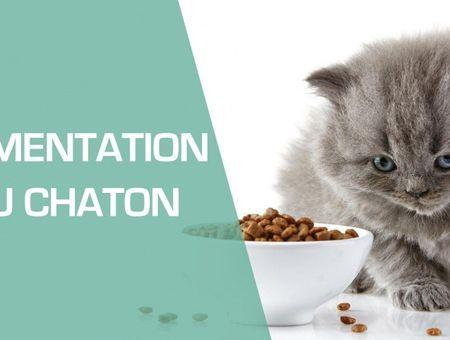 Comment nourrir un chaton ?