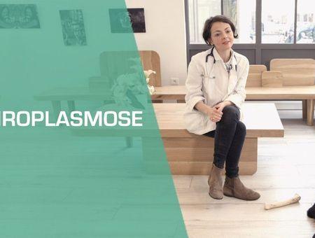 La piroplasmose chez le chien