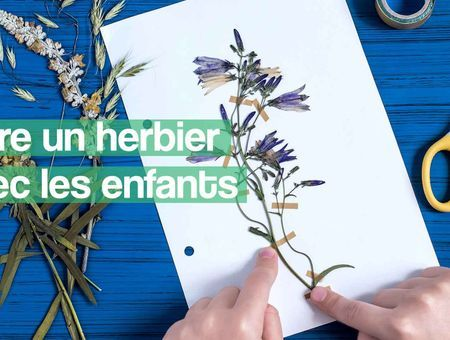 DIY - Comment faire un herbier ?