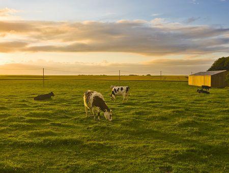 4 bonnes raisons de passer ses vacances à la campagne