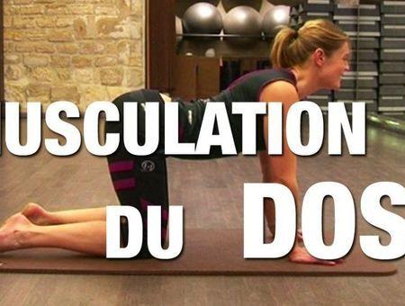 Musculation du dos