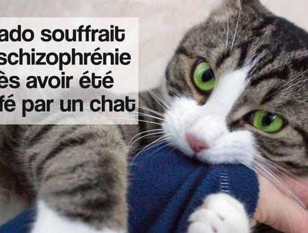 Un adolescent devient schizophrène après avoir été griffé par son chat