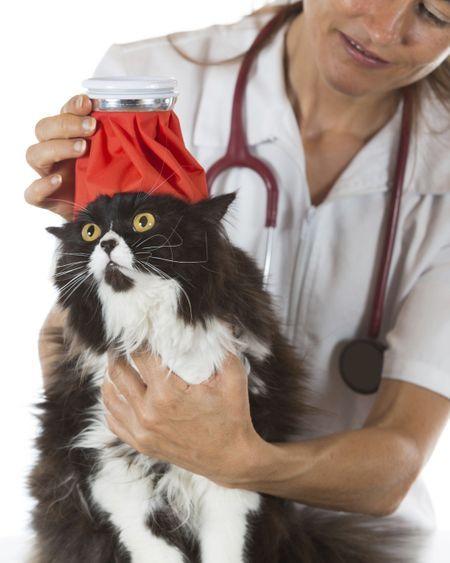 Mon chat a de la fièvre