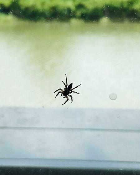Piqûre d'araignée : la reconnaître et la soigner