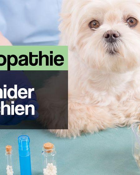 L'homéopathie pour aider mon chien
