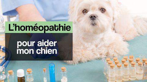chien homéopathie